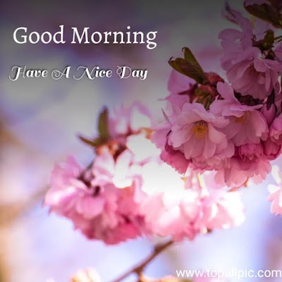 good morning flower for her with images