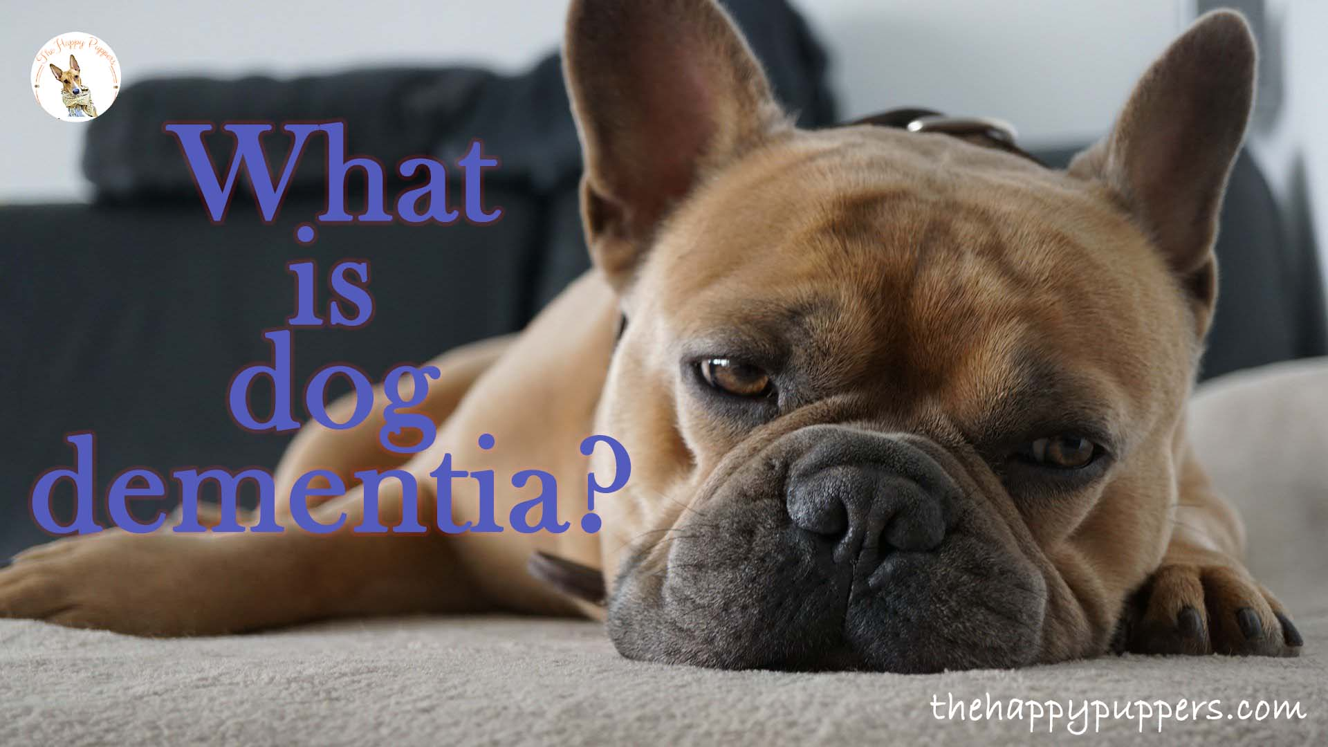 What is dog dementia?