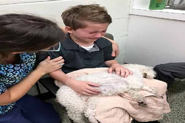 """Young Child Conveniences His Dying Dog: """"I Intend to Hold Her When She Goes To Paradise"""""""
