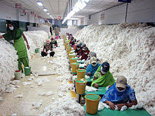 74% decline in cotton exports from India to China