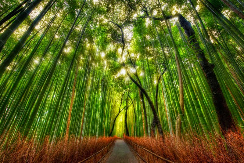 5. Sagano Bamboo Forest, Japan - 5 Fairytale Forests Straight Out of a Story Book