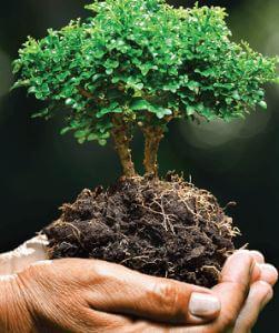 5 المجالات الرئيسية لعلوم البيئة