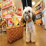 pet store in spanish