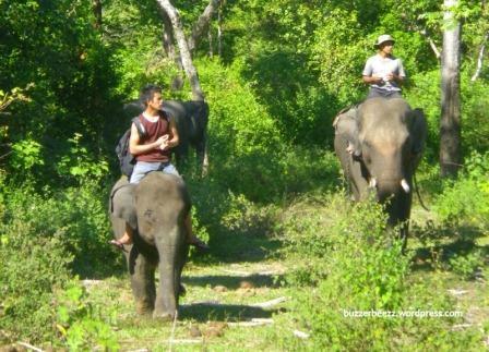 Tempat Wisata Di Aceh Pelatihan Gajah Sare