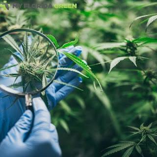 Medical Marijuana Card Sarasota