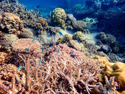 Snorkeling-Philippines