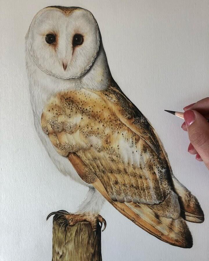 07-Barn-Owl-Bethany-Vere-www-designstack-co