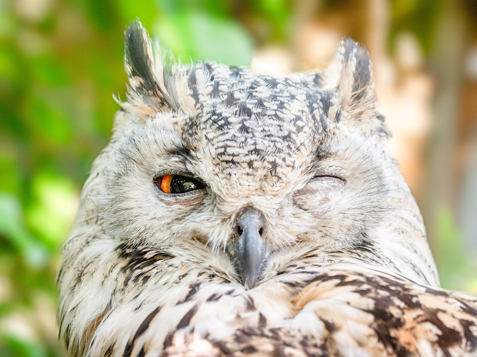 close-up-photo-of-owl-with-one-eye-open-bird-images