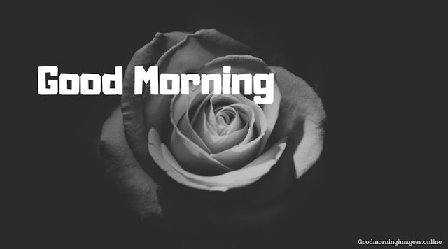 Good Morning Images In Roses