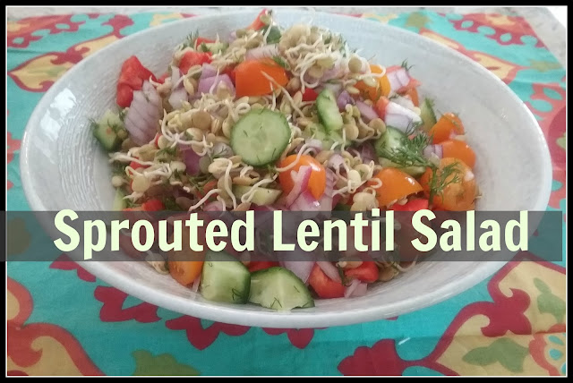 beautiful salad with lentil sprouts instead of lettuce