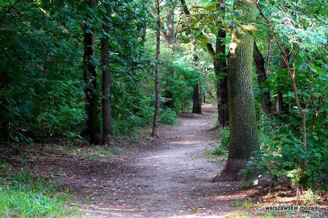 Ursynów teren zielony parki warszawskie rzeźba Warszawa Warsaw las
