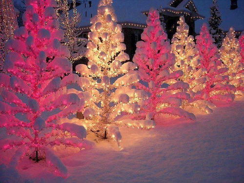 beautiful Christmas tree hd image