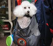 Pet Travel News Air Animal Pet Movers