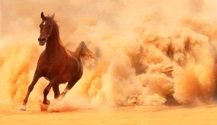 Mengenal Sejarah Tentang Kuda Arab