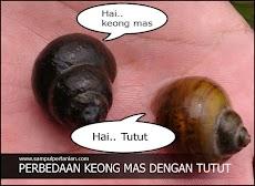 Perbedaan Keong mas dan Tutut (Keong Sawah)