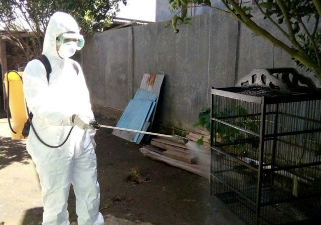 Diduga Flu Burung,  10 Ekor Ayam Mendadak Mati