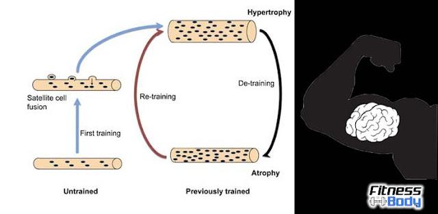 مفهوم الذاكرة العضلية