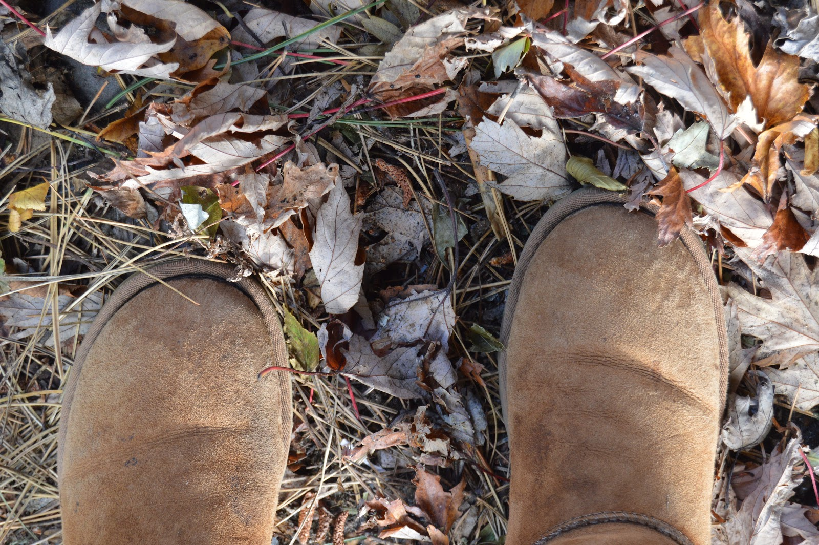 A pair of boot amongst fallen leaves