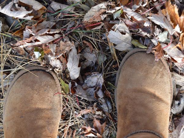Autumn Walks In The North West