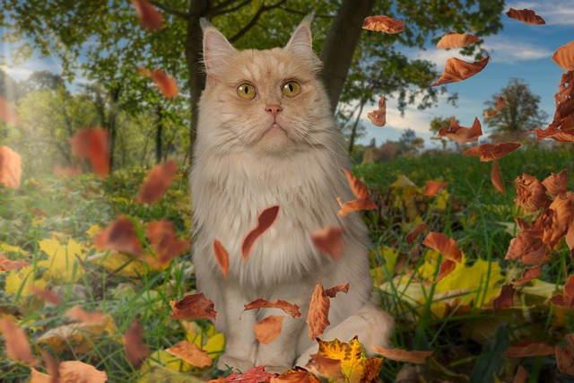 قطط الماين كون