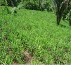 Beneficios del jengibre para adelgazar y la salud
