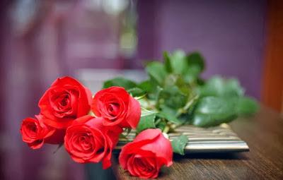 خلفيات ورد جوري احمر  ، خلفيات ورود جورية حمراء جميلة