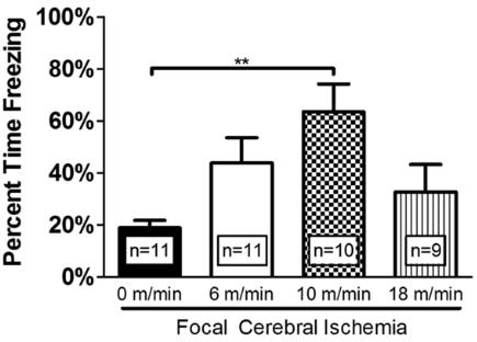 図:運動強度と脳卒中後の記憶能力
