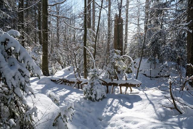 Rundweg Felswandergebiet  Wandern im Nationalpark Bayerischer Wald 18