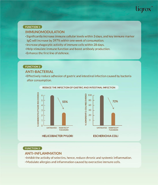 Three major functions of MARITECH Organic Fucoidan - Immunomodulation, anti-bacterial and anti-inflammation