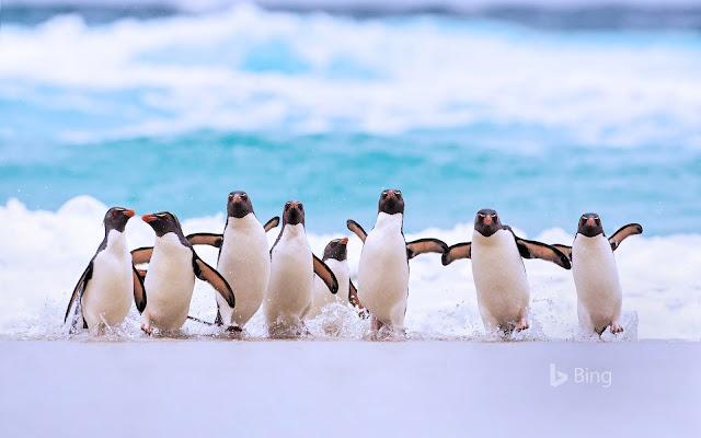 Baile pingüinos