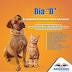 Brumado: Campanha de vacinação contra raiva animal para cães e gatos acontece neste sábado (18)