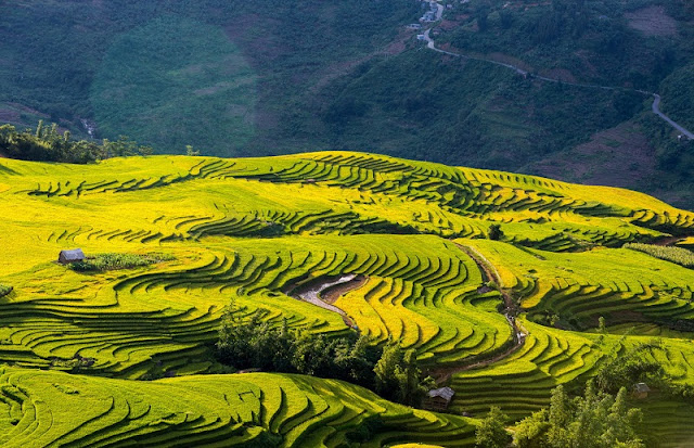 Looking for the hidden corner of the most beautiful season in Vietnam 3