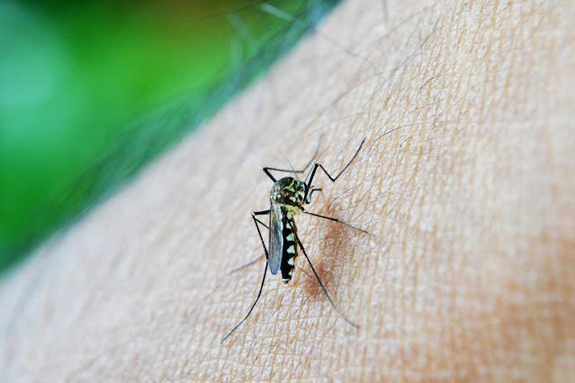 CURIOSIDADES: Cómo evitar las picaduras de insectos mientras duermes.