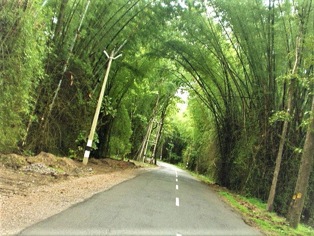 wayanad hotels  wayanad photos  wayanad resorts  wayanad population  wayanad to bangalore  wayanad weather  wayanad map  wayanad temperature