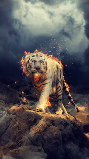 Tiger on Fire Mobile HD Wallpaper