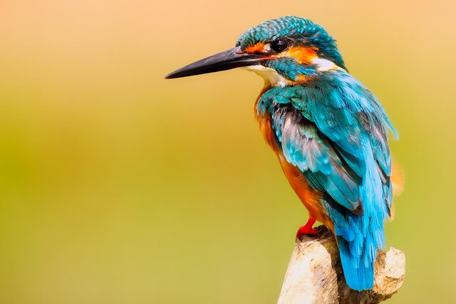 National Parks & Wildlife Sanctuaries in India