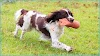 Positive dog training: principles and good practice