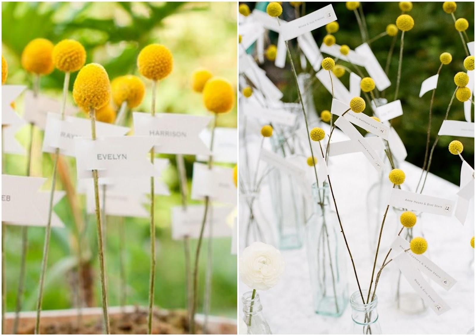 Fiori Del Mese Di Giugno le stagioni dei fiori: craspedia, il mio fiore di giugno