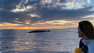 Le balene fanno capolino tra le acque di Capo Sant'Andrea