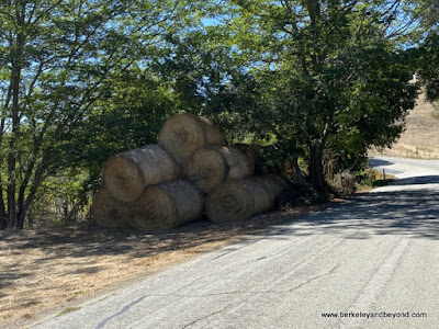 rolled bales of hay along Santa Rosa Creek Road in Cambria, California