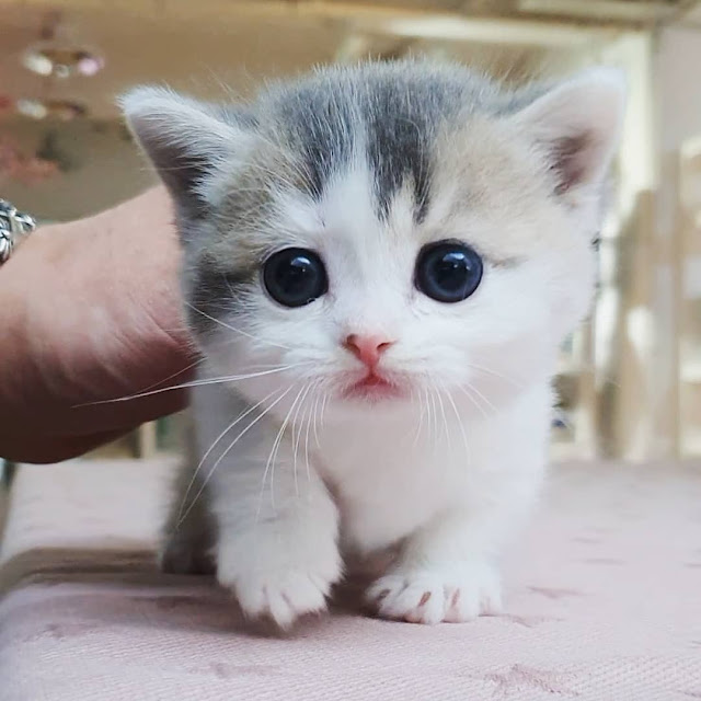 sweet cat pictures