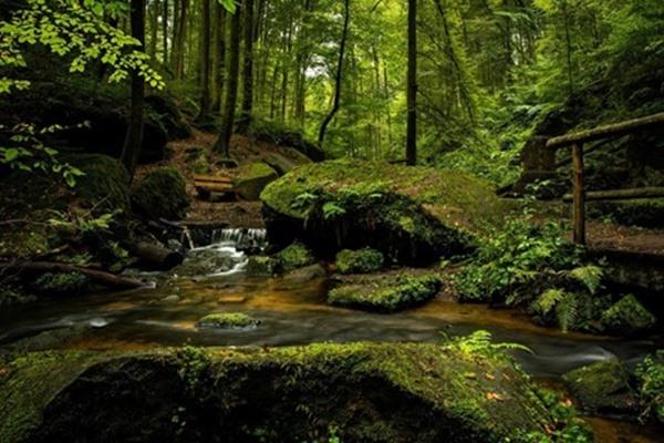 Jim Corbett's Love For Nature Jungle Lore