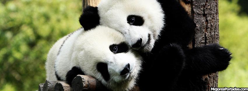 funny panda facebook timeline - photo #4
