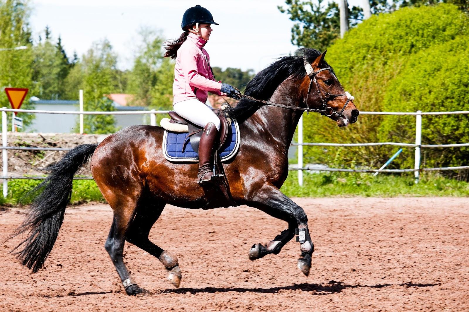 Miten Ratsastaa Hevonen Rennoksi