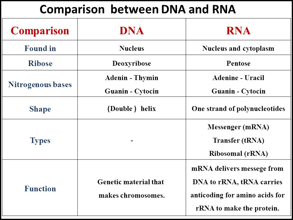 a comparison of the similarities and differences between dna and rna The key difference between dna and rna is that dna is double-stranded structure, while rna is single stranded structure the backbone of dna is of deoxyribose sugar which is made up of a long chain of nucleotides, while rna is of the ribose sugar and short chain of nucleotides.