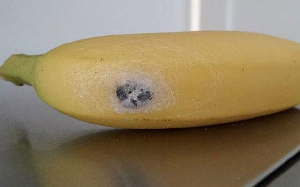 Araña encontrada en plátanos causa erección de cuatro horas