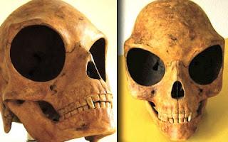 """Durante escavações realizadas na cidade de Olstykke, na Dinamarca, pesquisadores encontraram um crânio que é 50% maior que a cabeça humana e que possui cavidades enormes na região dos olhos. O objeto batizado de """"crânio de Sealand"""" foi encontrado por trabalhadores que substituíam a tubulação de esgoto debaixo de uma antiga casa."""