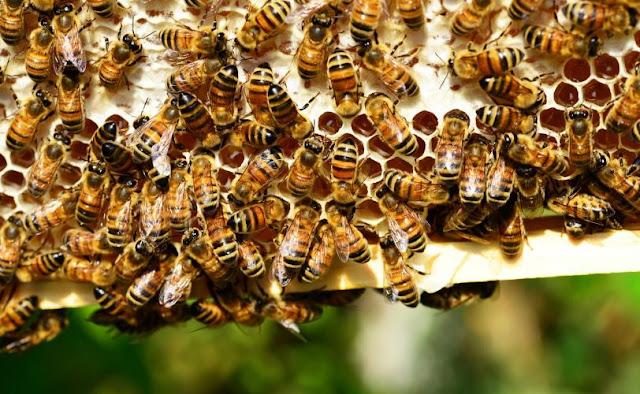 Ονειροκρίτης: Αν δεις στον ύπνο σου μέλισσα - μέλισσες