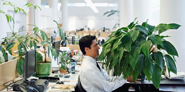 Manfaat Tanaman Hias untuk Produktivitas Kerja