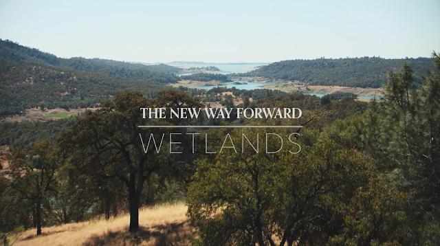 The New Way Forward: Wetlands